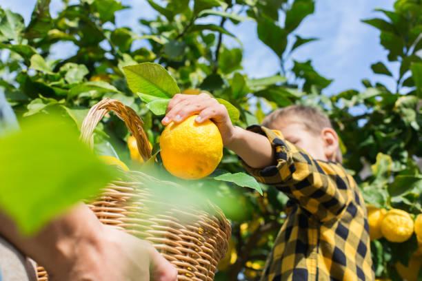 12 Benefícios do limão para a saúde 1