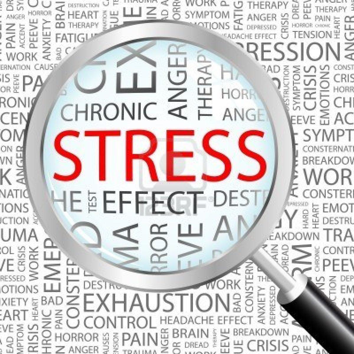 9 alimentos que reduzem o stress 1
