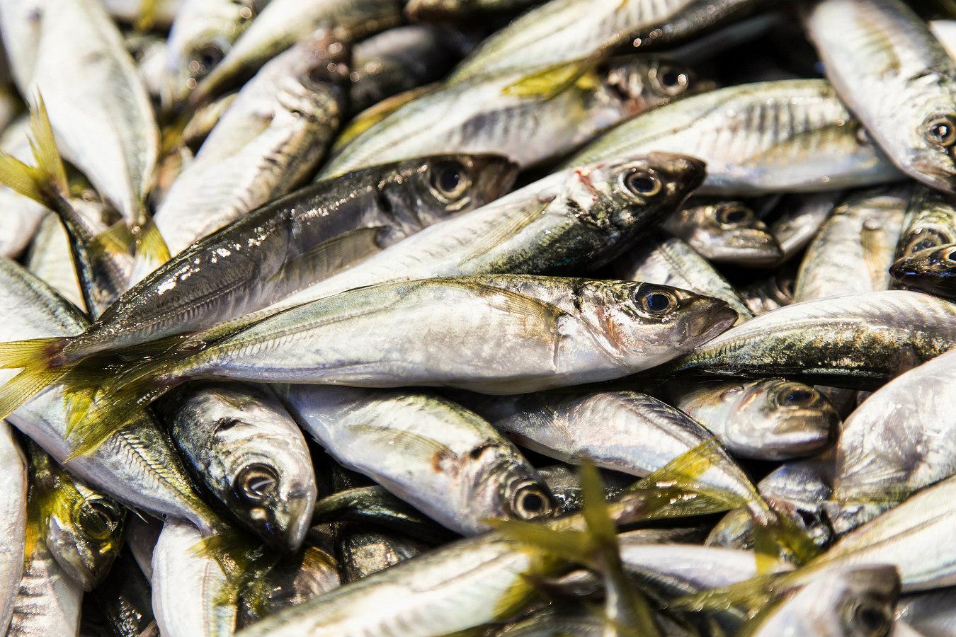 Os peixes mais saudaveis para a saude
