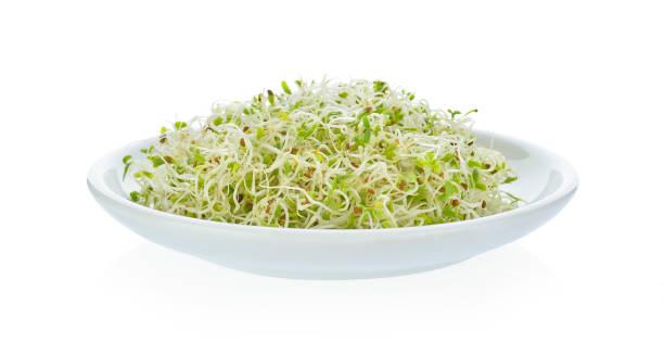 Emagrecer com plantas medicinais 6