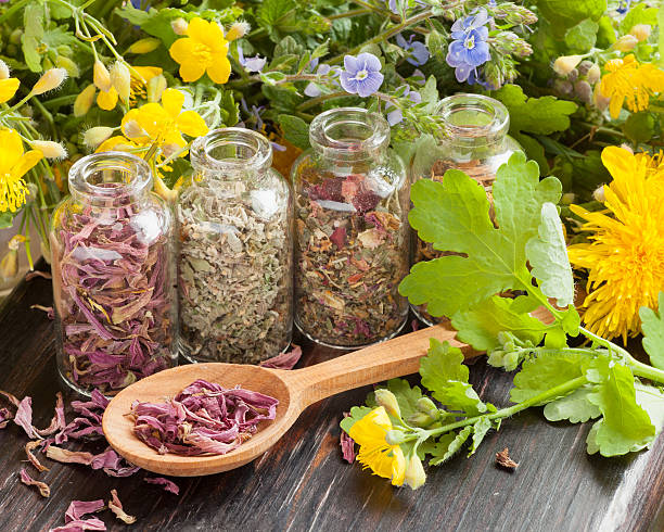 Equinácea - a planta que reforça o sistema imunitário 5